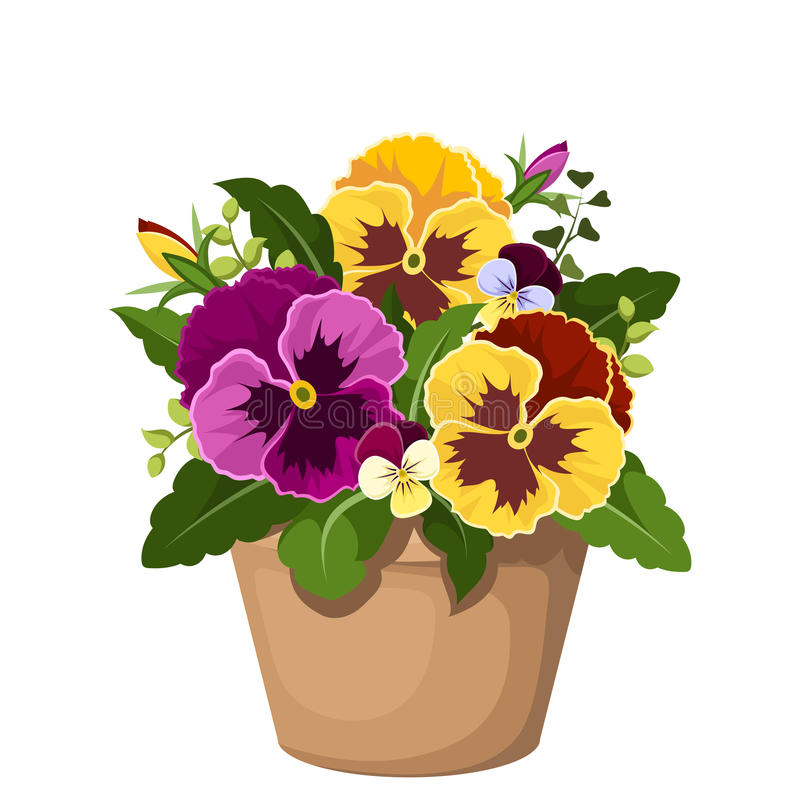 Pansy flowers in a pot. royalty free illustration
