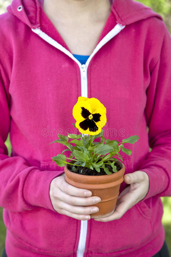 Download Pansy Gardener stock image. Image of woman, female, growth - 26970723