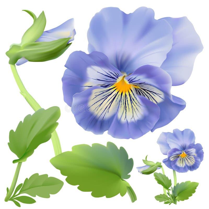 Pansy kwiat royalty ilustracja