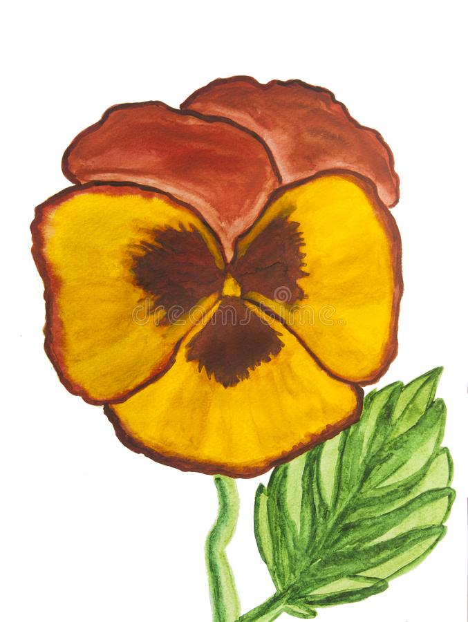 Pansy of orange and yellow colours on white background stock image