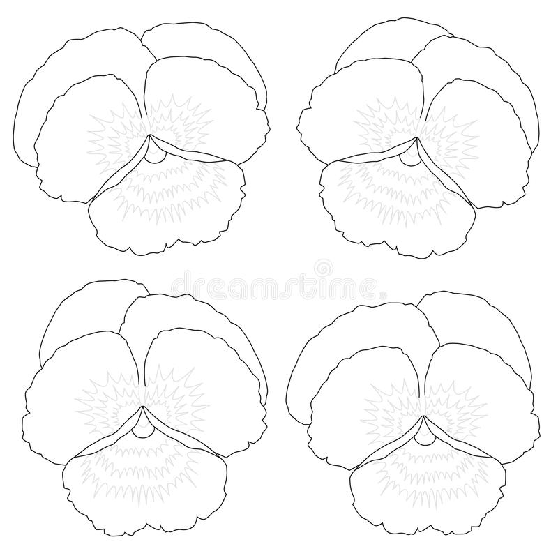 Pansy Outline Coloring Picture libre illustration