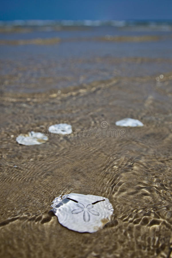 Download Pansy Shells stock photo. Image of design, ripples, shells - 23086870
