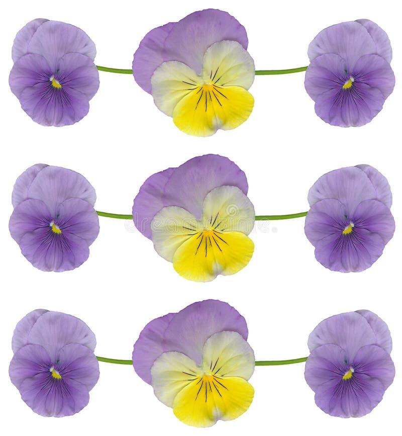 Pansy- und Violablumen stockbild