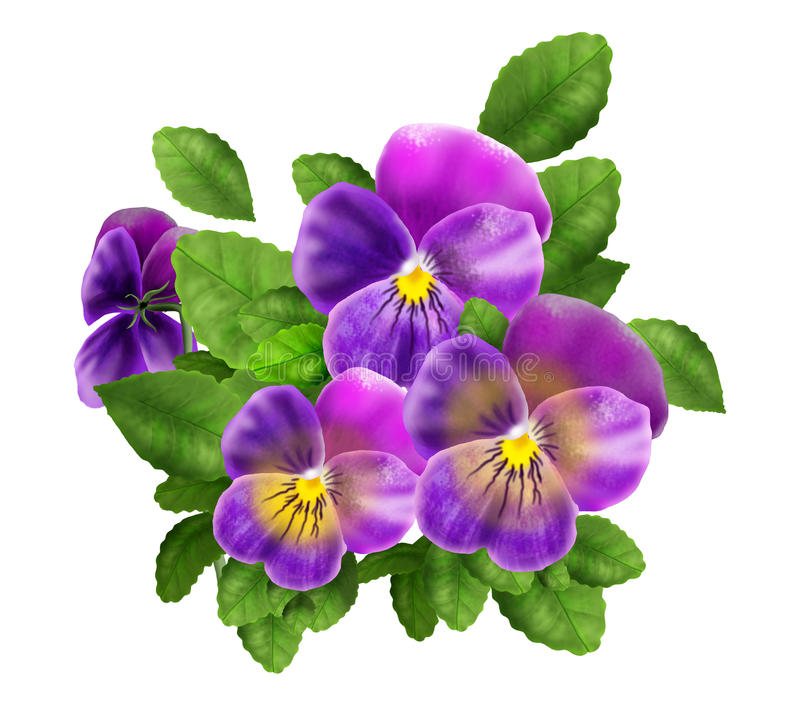 Pansy violet flowers isolated watercolor illustration Viola Tricolor realistic, decoration stock illustration
