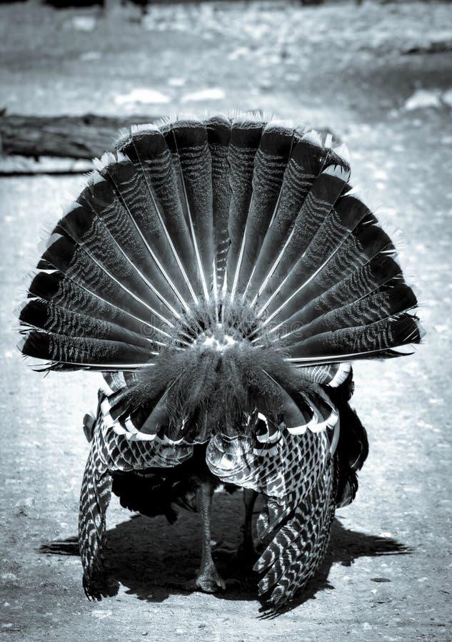 Pantalla de plata Turquía imagen de archivo libre de regalías