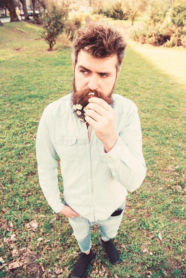 Pantaloni a vita bassa sul supporto calmo del fronte su erba, defocused Concetto naturale di bellezza L'uomo con la barba ed i ba fotografia stock