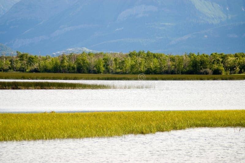 Pantanais foto de stock royalty free