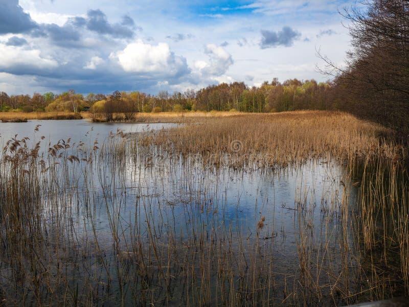 Pantanais e juncos em Potteric Carr, South Yorkshire imagem de stock royalty free