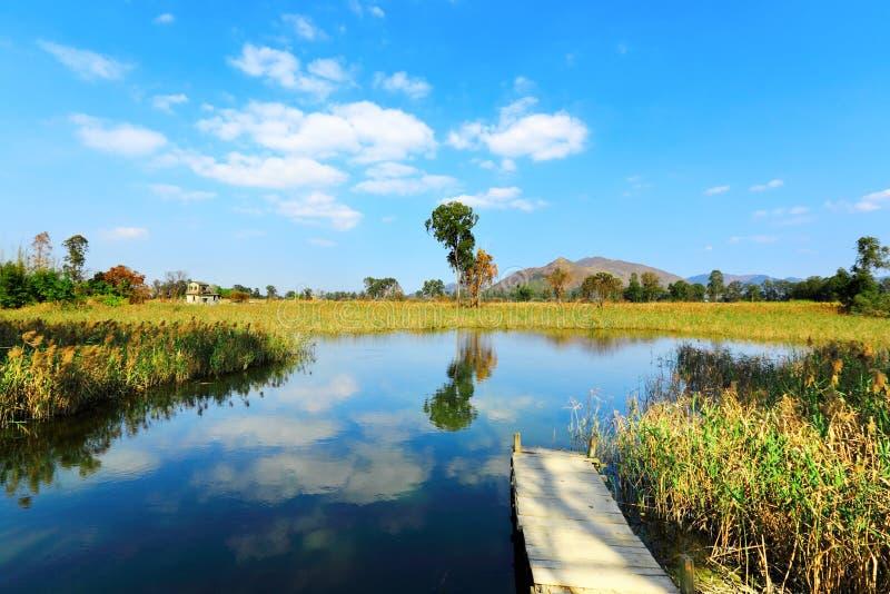 Pantanal fotografia de stock