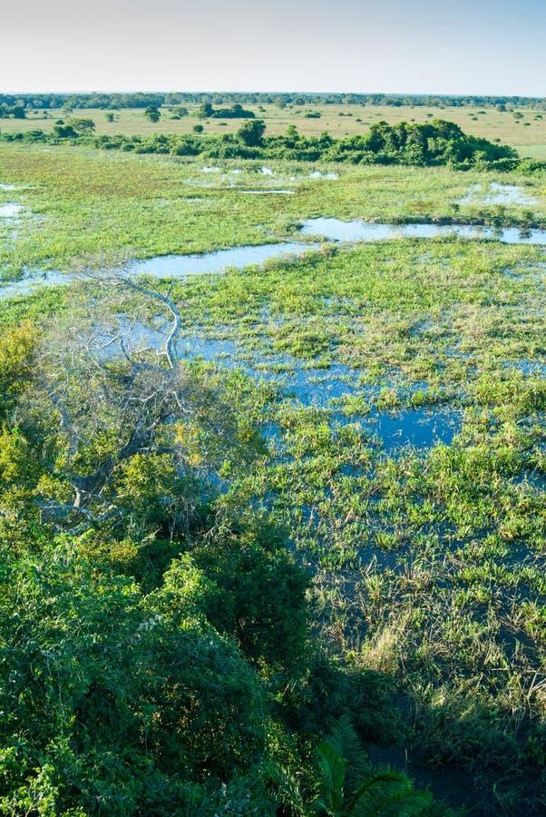 Pantanal bagna, Brazylia zdjęcia royalty free