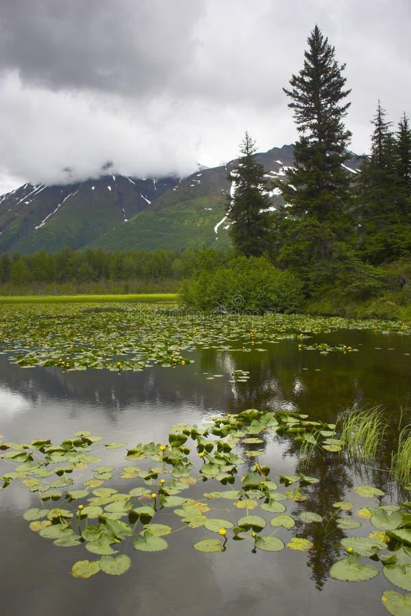 Pantanal de Alaska foto de stock royalty free