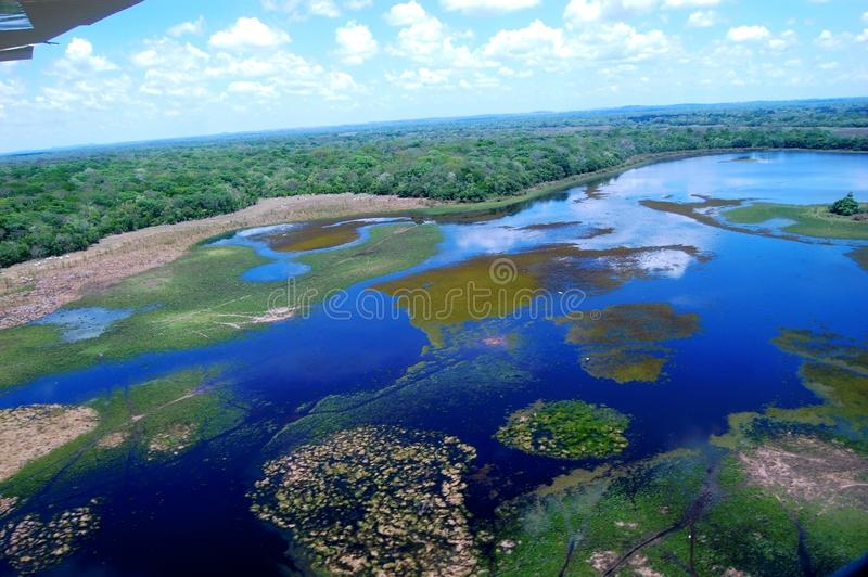 Pantanal del sud immagine stock