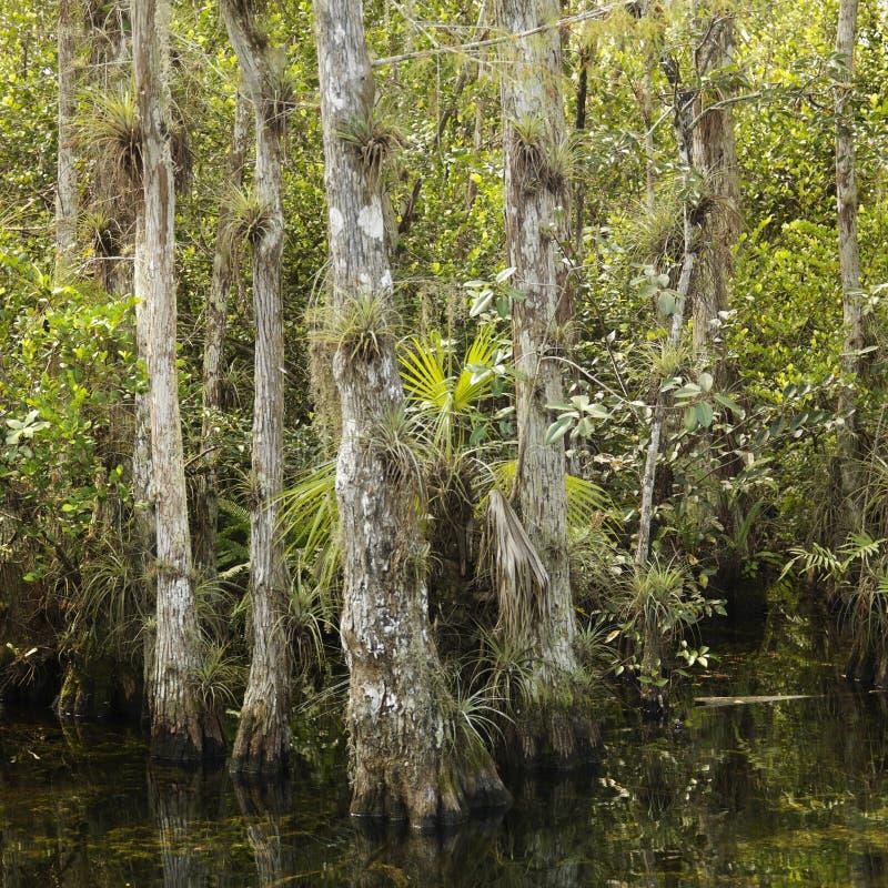 Pantanal em marismas de Florida. foto de stock