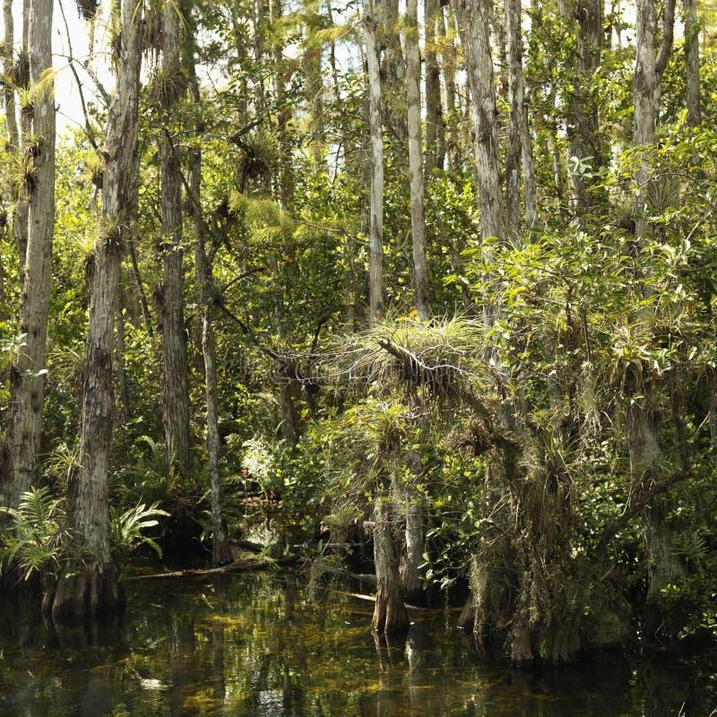 Pantanal em marismas de Florida. fotos de stock royalty free