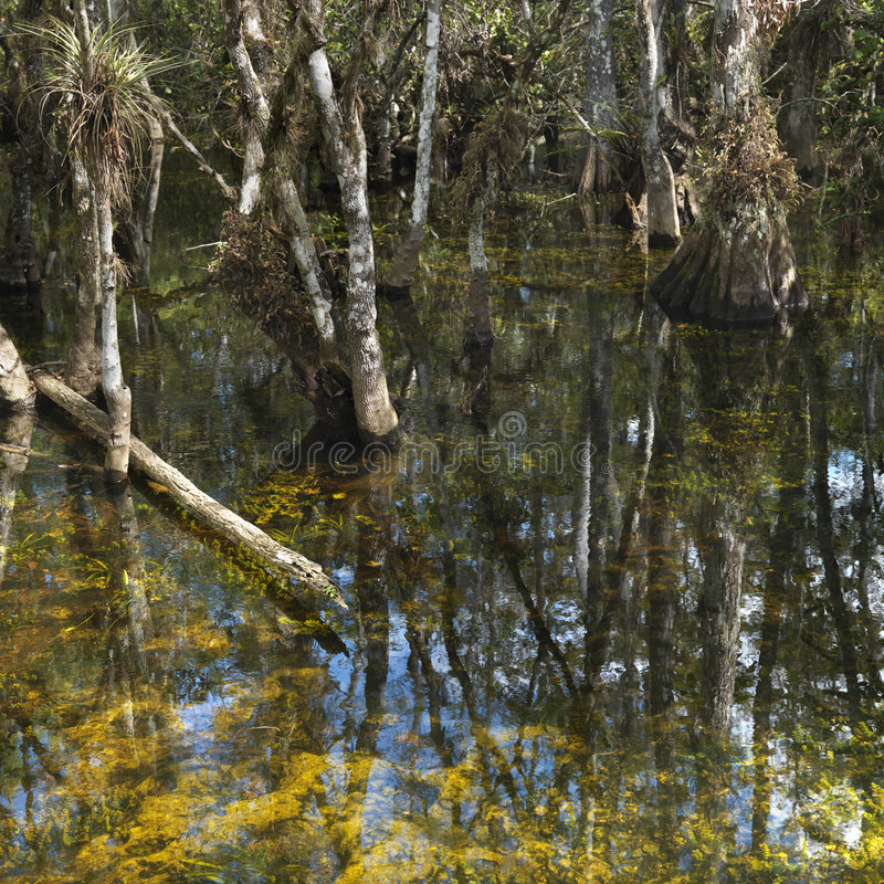 Pantanal em marismas de Florida. imagem de stock