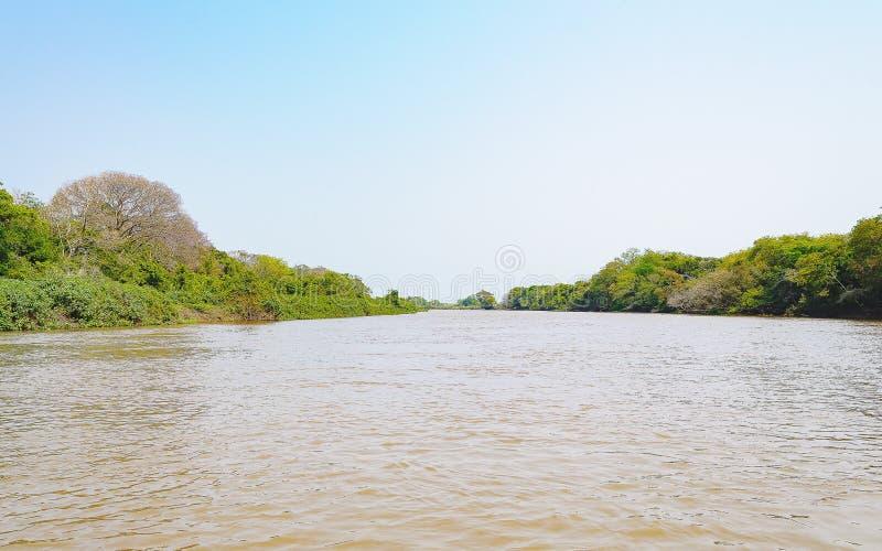 Pantanal krajobraz z rzeką i zieleni roślinność na ri obraz stock