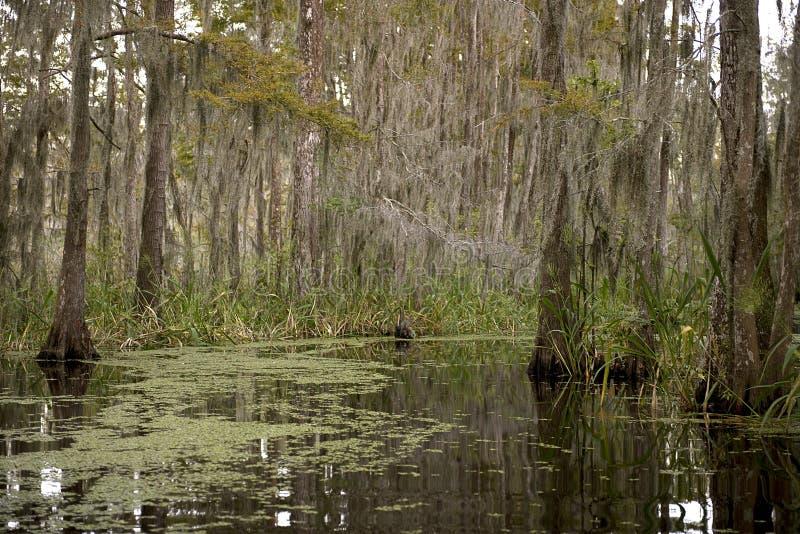 Pantano cerca de New Orleans, Luisiana fotografía de archivo libre de regalías