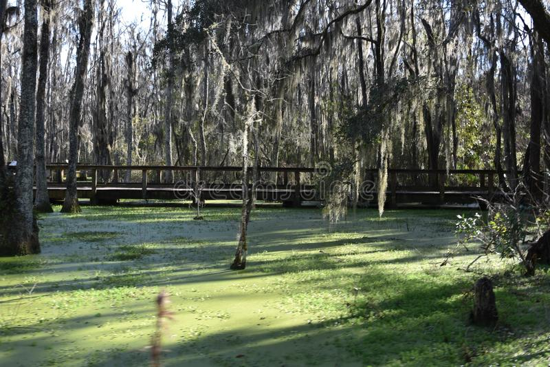 Pantano de Audubon cerca de Charleston South Carolina fotos de archivo