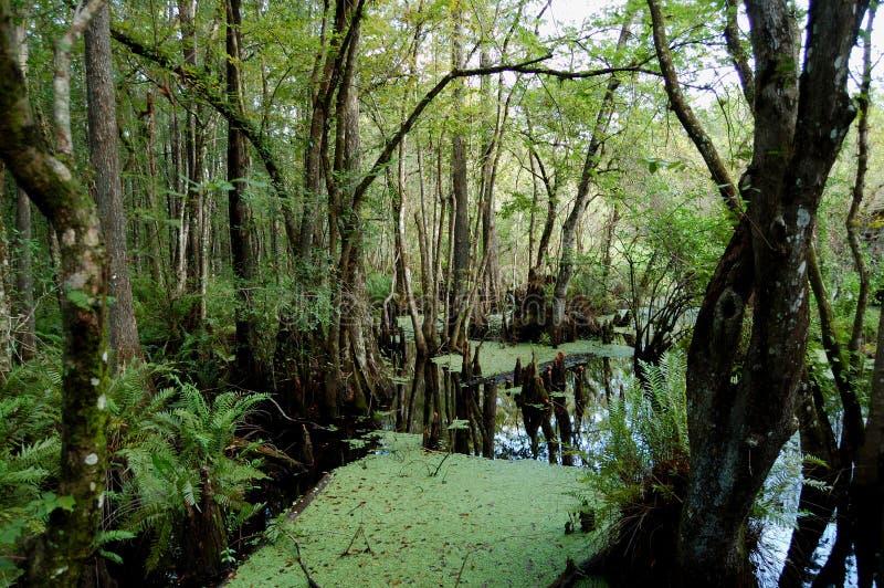 Pantano de Cypress de seis millas foto de archivo