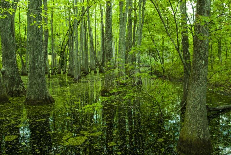 Pantano de Cypress, rastro de Natchez, ms imagenes de archivo