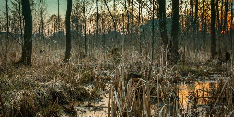 pantano de la primavera en las cercanías de la ciudad imagen de archivo