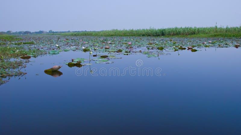Pantano de Lotus imagen de archivo