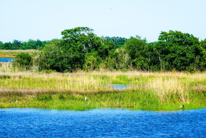 Pantano de Luisiana fotos de archivo libres de regalías