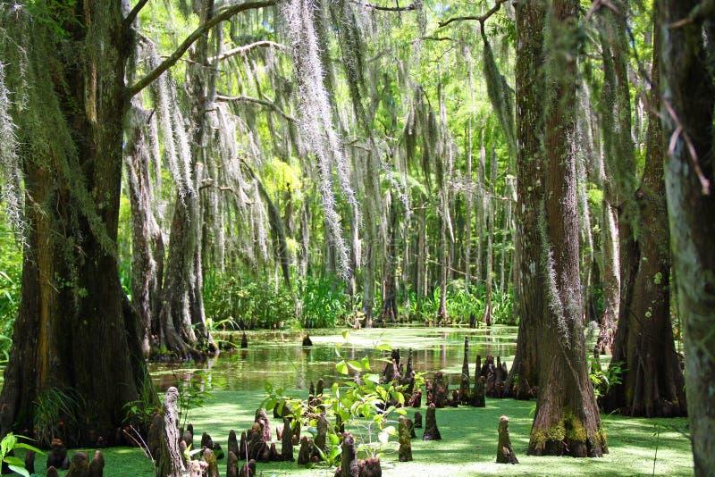 Pantano de Luisiana fotos de archivo