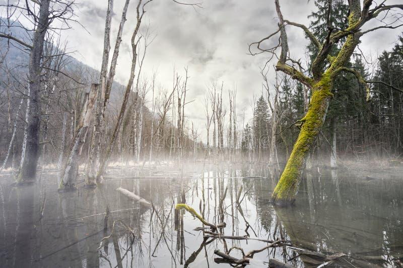 Pantano de niebla místico con los árboles muertos imágenes de archivo libres de regalías
