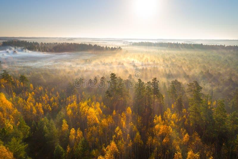 Pantano del otoño por la mañana imagen de archivo