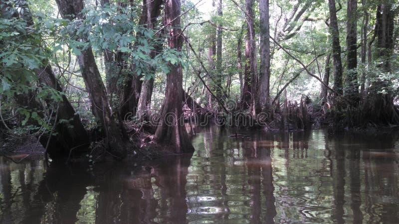 Pantano del río de la ciénaga del río Savannah imagen de archivo libre de regalías