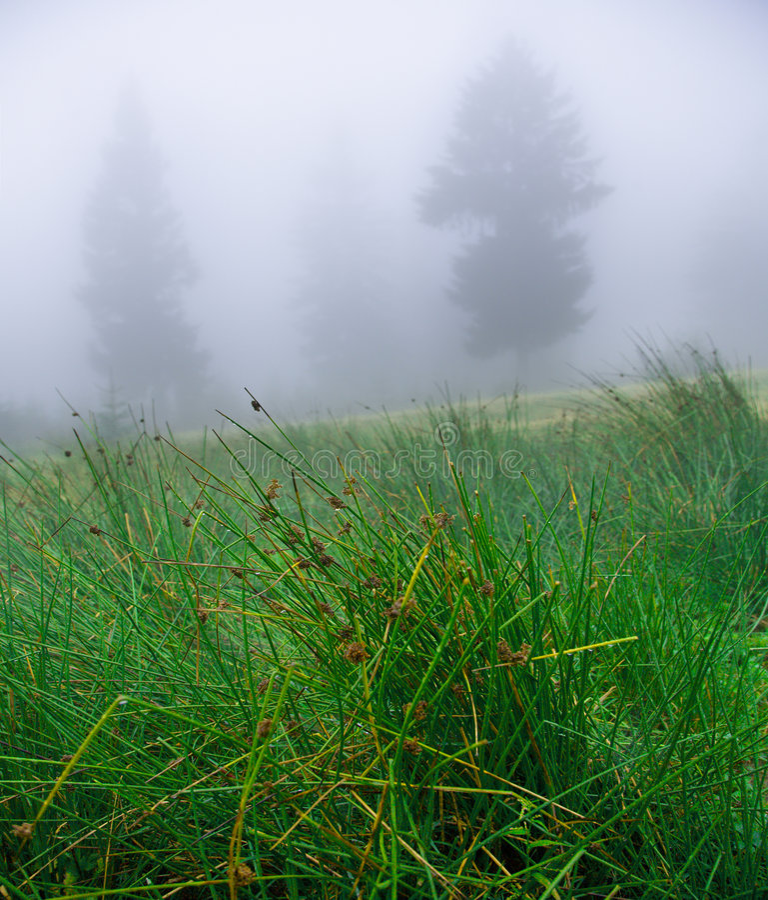 Pantano en niebla foto de archivo