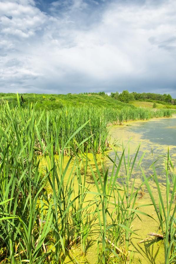 Pantano Escena verde enorme del pantano fotos de archivo libres de regalías