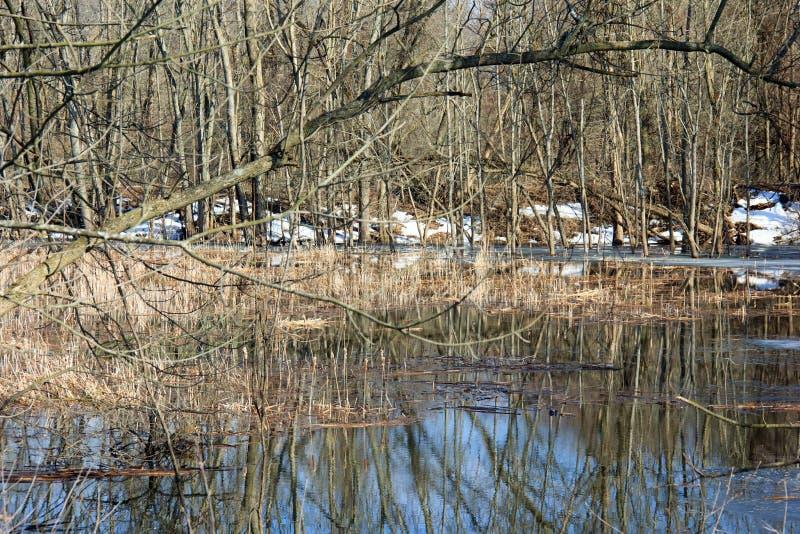 Pantano inundado imagen de archivo