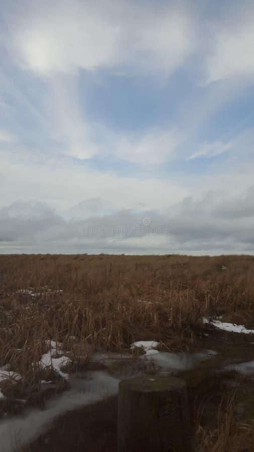 Pantano quebradizo del invierno fotografía de archivo libre de regalías
