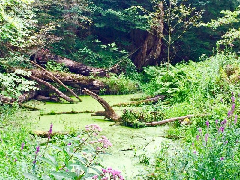 Pantano verde fotografía de archivo