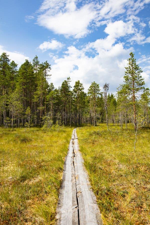Pantano y cielo azul en Finlandia foto de archivo
