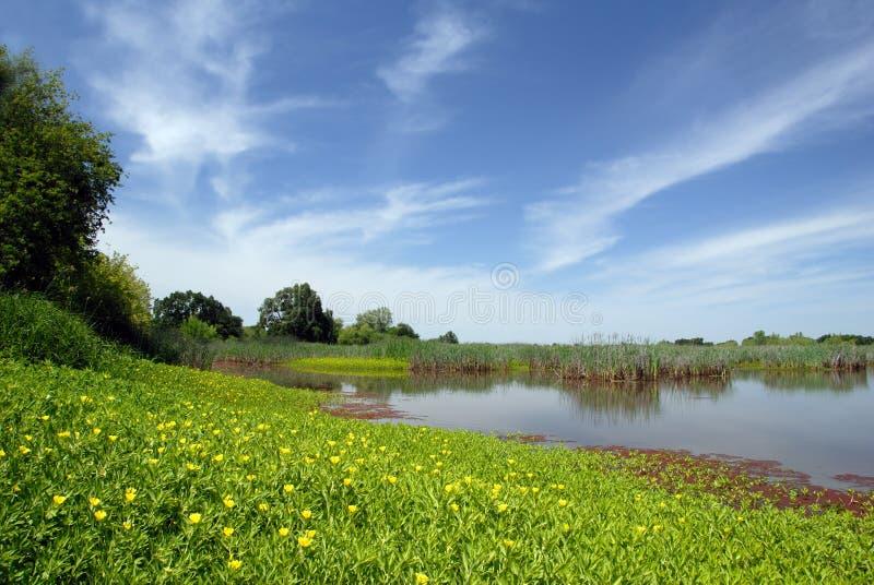 Pantano y prado del verano foto de archivo
