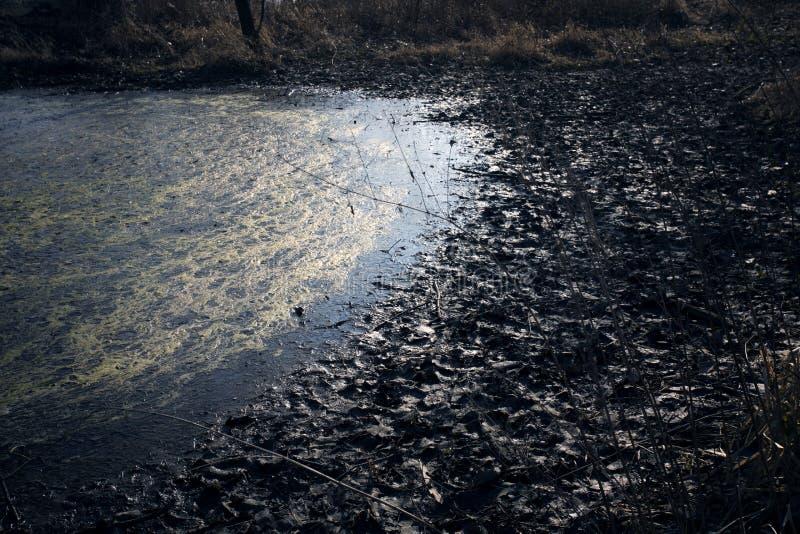 Pantanos en otoño Lago oscuro fresco en bosque primitivo fotos de archivo libres de regalías