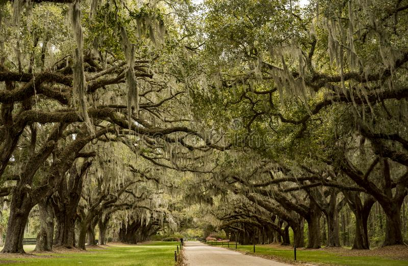 Pantation di Boone Hall in Sc U.S.A. di Charleston fotografie stock