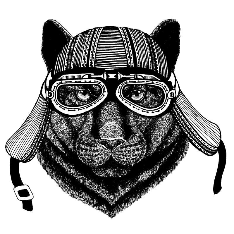 Panter kuguar, puma, hjälm för motorcykel för löst löst cyklistdjur för katt bärande Utdragen bild f?r hand f?r tatueringen, embl stock illustrationer