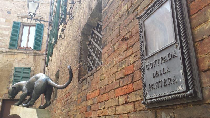 Pantera Contrada em Siena - Itália fotografia de stock