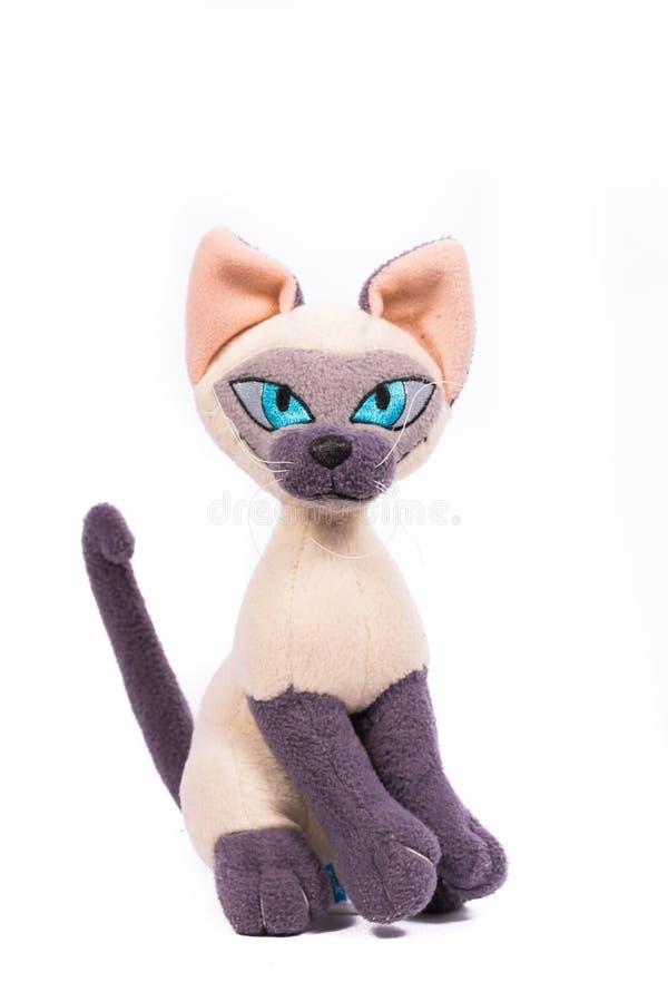 Pantera pequena com olhos azuis fotos de stock royalty free