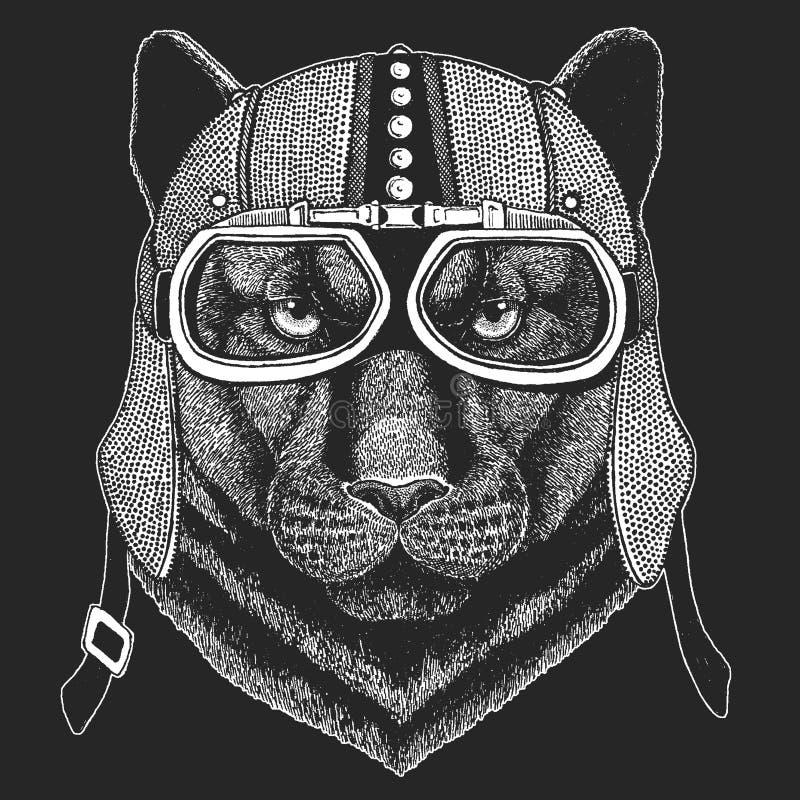 Pantera, puma, kuguar, dziki kot, jaguar Rocznika motocyklu hemlet Retro stylowa ilustracja z zwierzęcym rowerzystą dla ilustracji