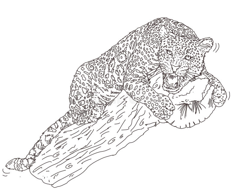 Pantern på den uppåtriktade elasticiteten för stammen väntar på dess rov stock illustrationer