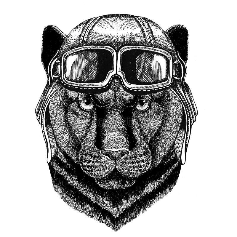 Pantery pumy kuguara Dziki kot jest ubranym rzemiennego hełma lotnika, rowerzysta, motocykl ręka rysująca ilustracja dla tatuażu ilustracja wektor