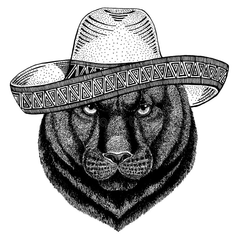 Pantery pumy kuguara Dziki kot jest ubranym tradycyjnego meksykańskiego kapelusz Klasyczny pi?ropusz, fiesta, przyj?cie royalty ilustracja
