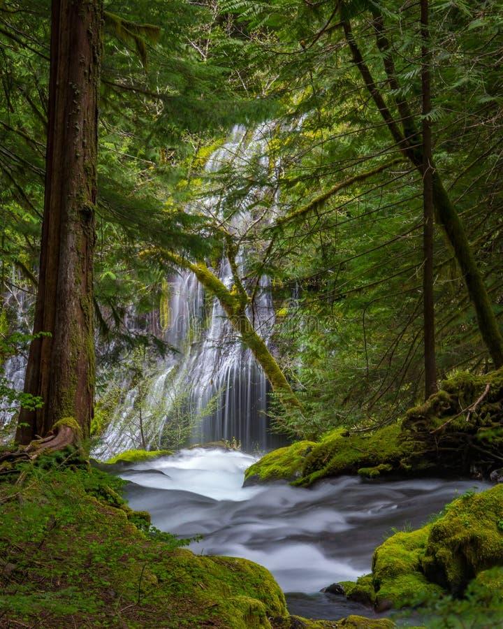 Download Panther Creek Falls stock photo. Image of washington - 77757650