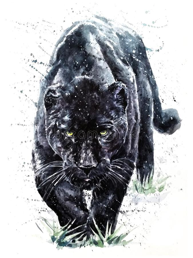 Panther watercolor predator animals wildlife painting. Panther watercolor painting, predator animals wildlife, art for t-shirt, poster design stock illustration