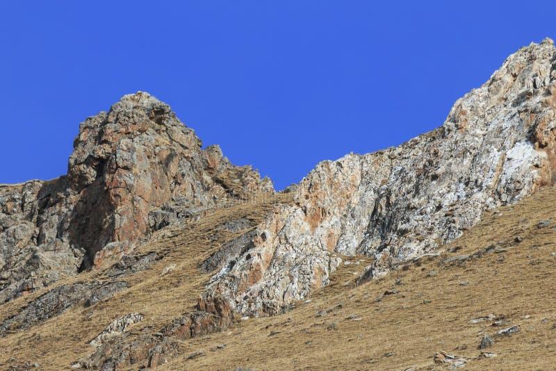 Panthera camuflado SALVAJE Uncia de la onza en Tíbet que camina en un lado de la montaña fotografía de archivo libre de regalías